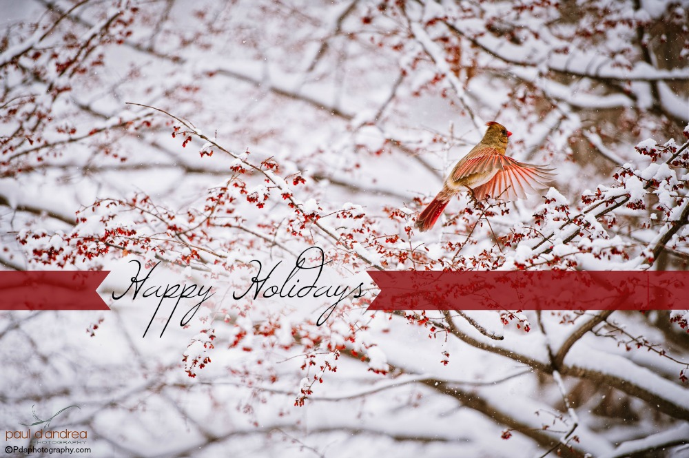 Happy Holidays_2016 ribbons